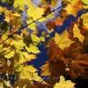 The Autumn Leaves (Les Feuilles Mortes)