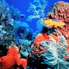 Immersed In The Ocean (Deep Trance) Dj Alexa