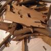 Tree Bark Bone Breaks