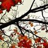 The Autumn Leaves (Original Vocal Mix)