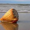 Loalue - Sea Shells