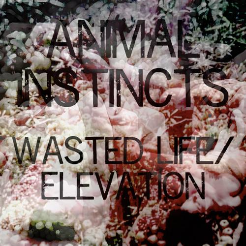 animal testing life wasting