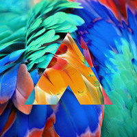 Chromatics Birds of Paradise (Amtrac Remix) Artwork