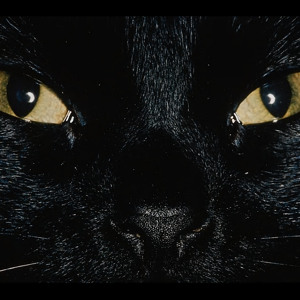 Black Cat John Brown (Original Mix) by Bakermat