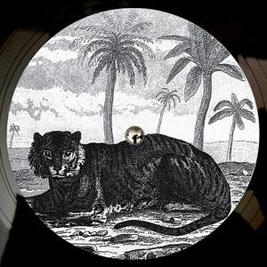 Lied (Out 10 Dec on Vinyl) by Tigerskin