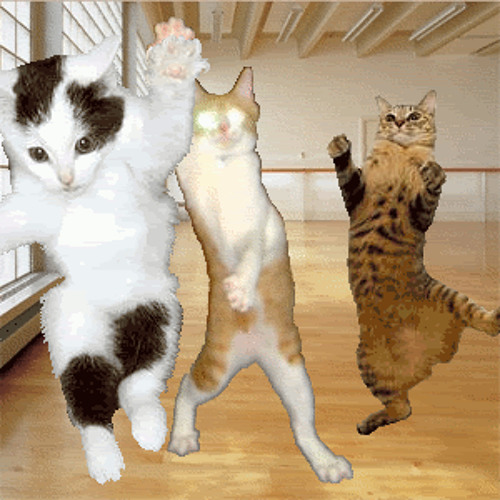 Cat dancing animation