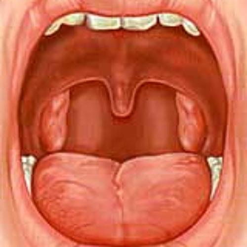 Как выглядят миндалины здорового человека