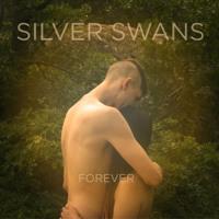 Silver Swans San Angela Artwork