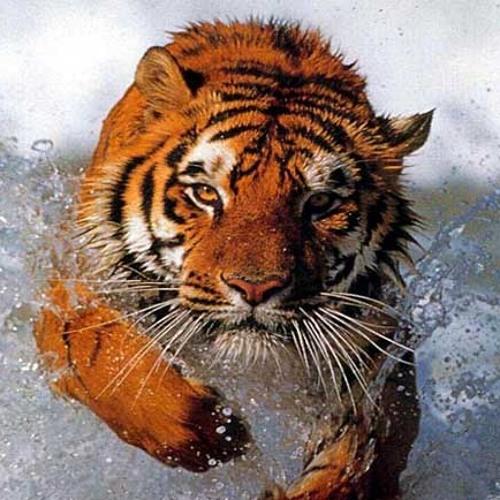 Titanium Tigers