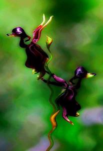 صور زهرة البط الأستراليه شئ غريب Artworks-000044501581-yqb2tm-crop