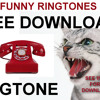 ANGRY CAT FREE mp3 Ringtone to download and use