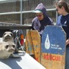 Women in STEM: Marine Mammal Center combines science with animal welfare