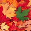 Cest En Septembre Gilbert Bu00e9caud Cover Mp3