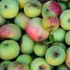 How to make a Cranberry-Apple Shrub