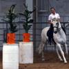 Working Equitation