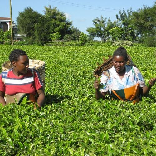 Frankie Gikandi y las mujeres de Kenia