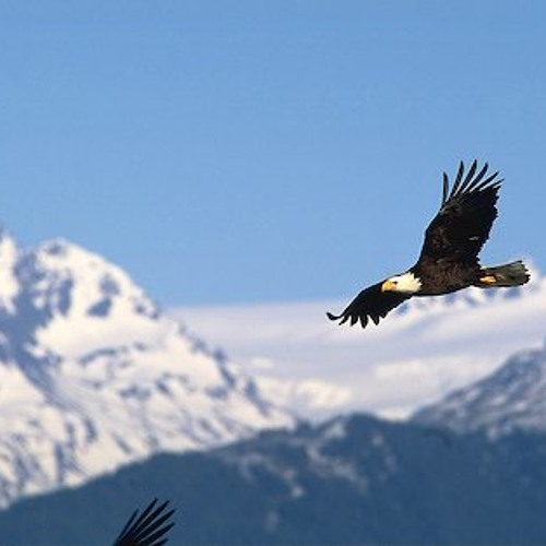 Eagle flying in the sky mountains