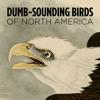 5 dumb-sounding birds of North America