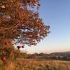 Autumn (based on: canon in D major / Johann Pachelbel)