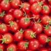 Michael Kelly tells us how to make homemade ketchup and gives an update on Grow HQ