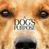Download A Dog's Purpose 2017 Full Movie Free Bluray 720p