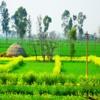 Apna Punjab- Gurdas Maan FT. ManiD [Sample]