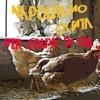 Per Colpa Di Chi (Zucchero) feat. Lea Likar