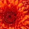 MERI KOL PELES- Fresh HITS From Steven Francis (PNG Latest Music)