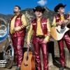 🎵Que se canse de Llamar- Los Plebes Del Rancho 2017🎶