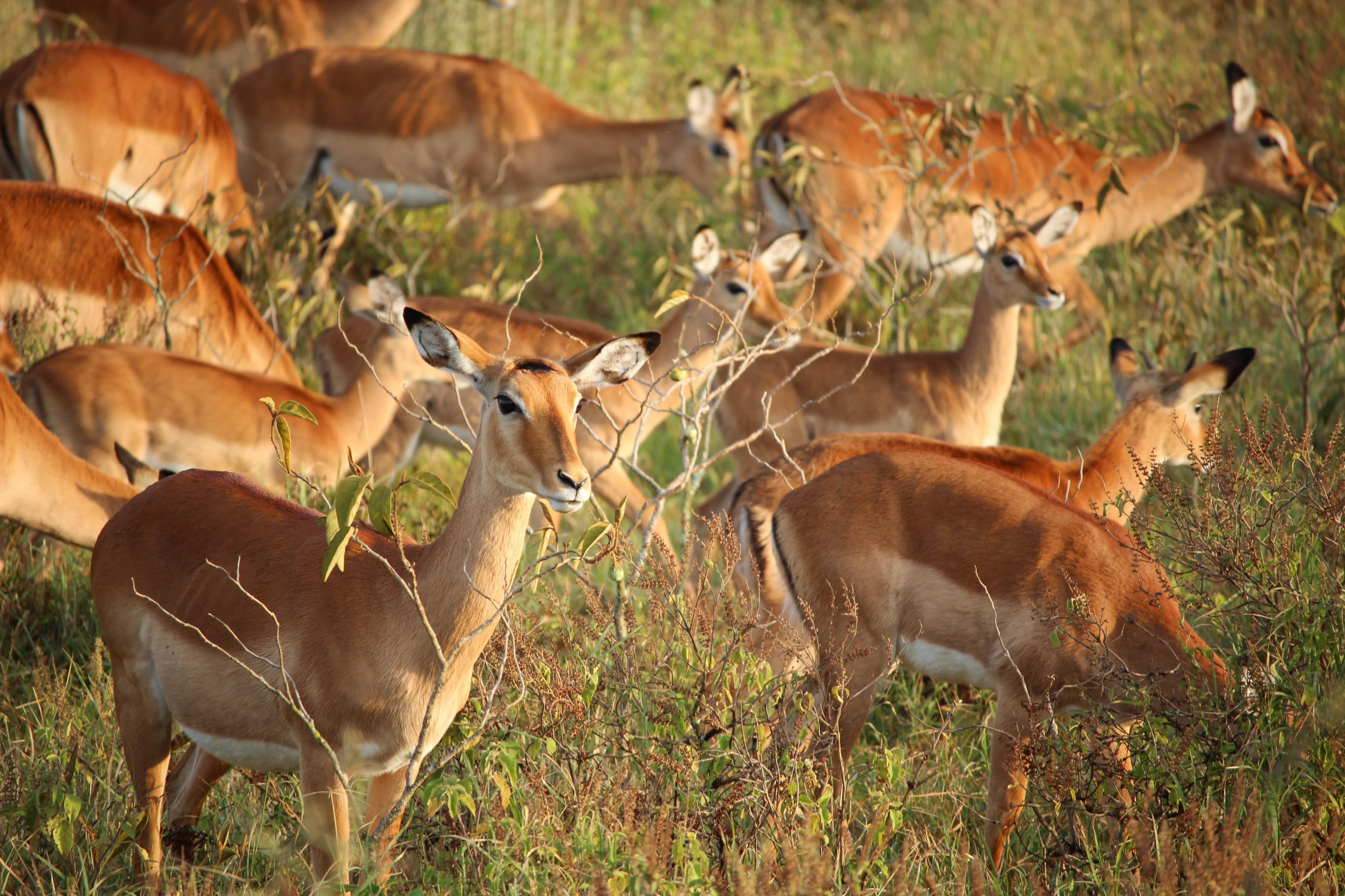Should Africa-focused Investors Hunt Gorillas, Gazelles Or Unicorns?