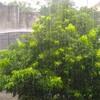 dan hujan