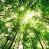 Seven Colors for Solo Violin IV. Green Audio Sample