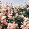 Medicine By Harry Styles W Clear Audio Updated Lyrics