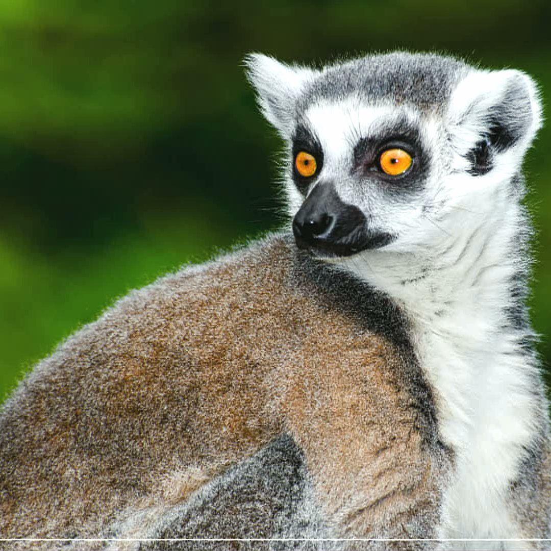 BUBO cestovanie: Madagaskar