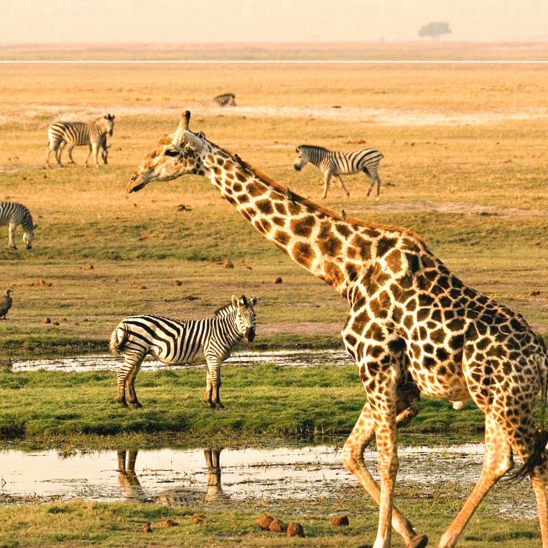 BUBO cestovanie: Juh afrického kontinentu.