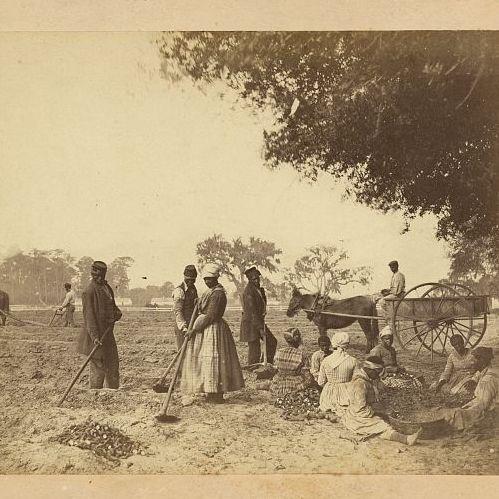 Writing Environmental Histories of Slavery | Tony Perry