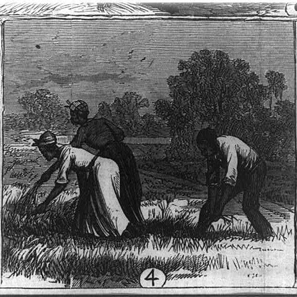 Revisiting Slavery and Capitalism | Justene Hill Edwards