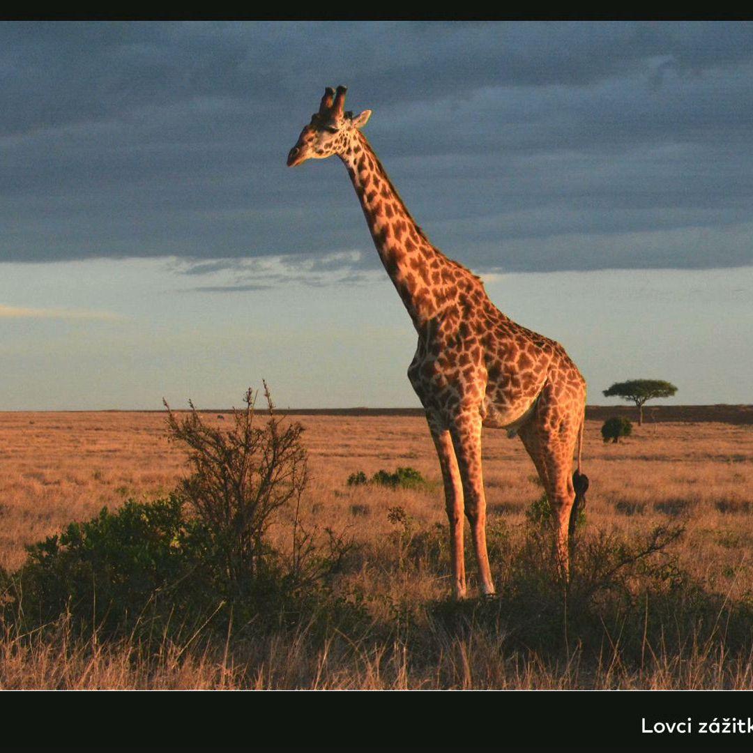 BUBO cestovanie: Keňa, Tanzánia, Zanzibar