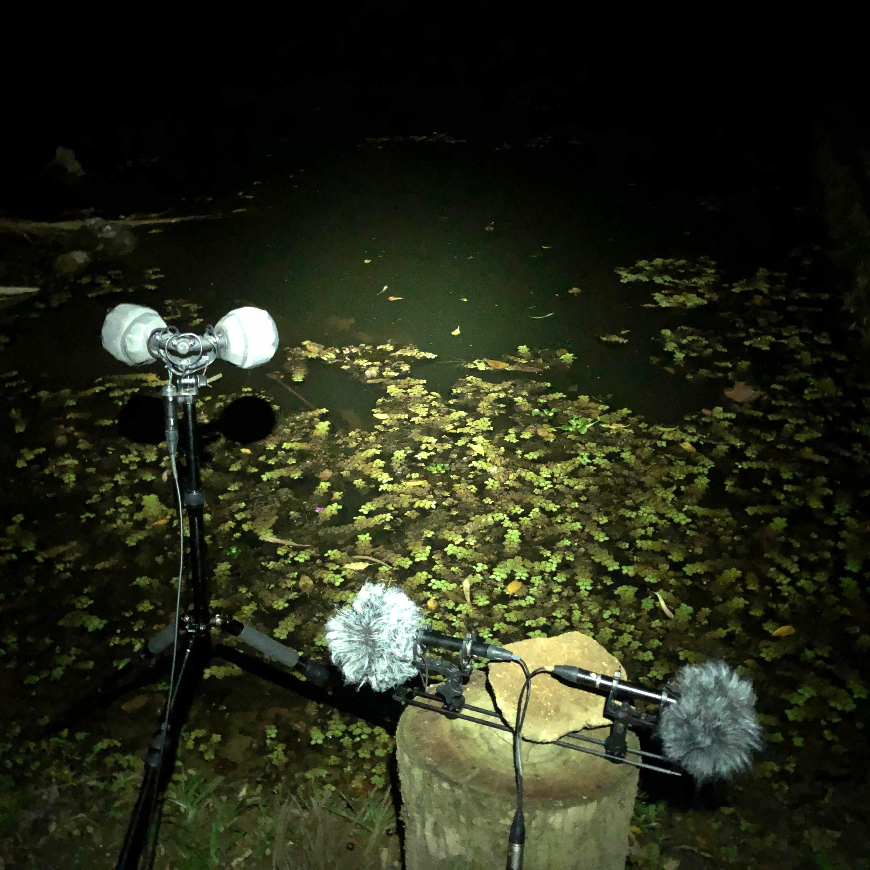 Felix Blume's Sounds