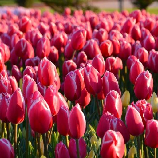Podquisition 255: Tulips In Knickers