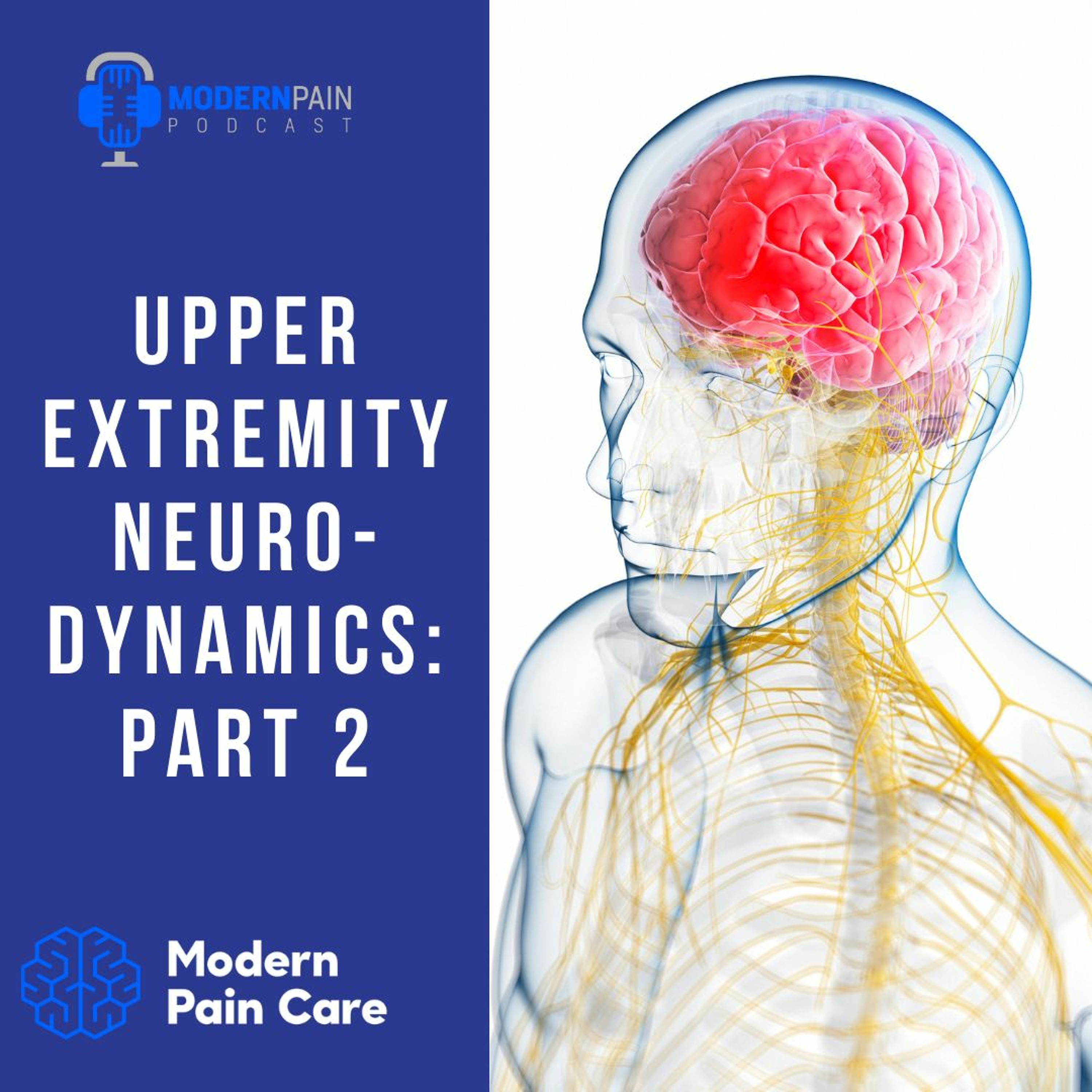 Upper Extremity Neurodynamics: Part 2