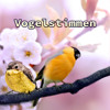 Zwitschern Vögel auf einem Baum