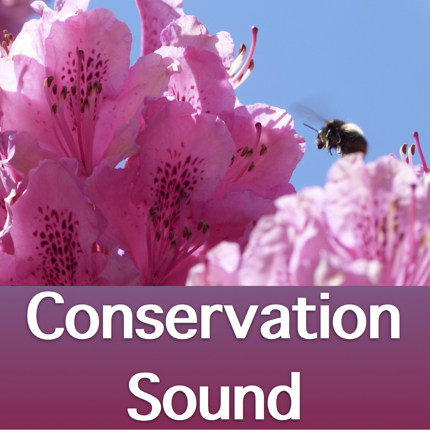 Conservation Sound podcast