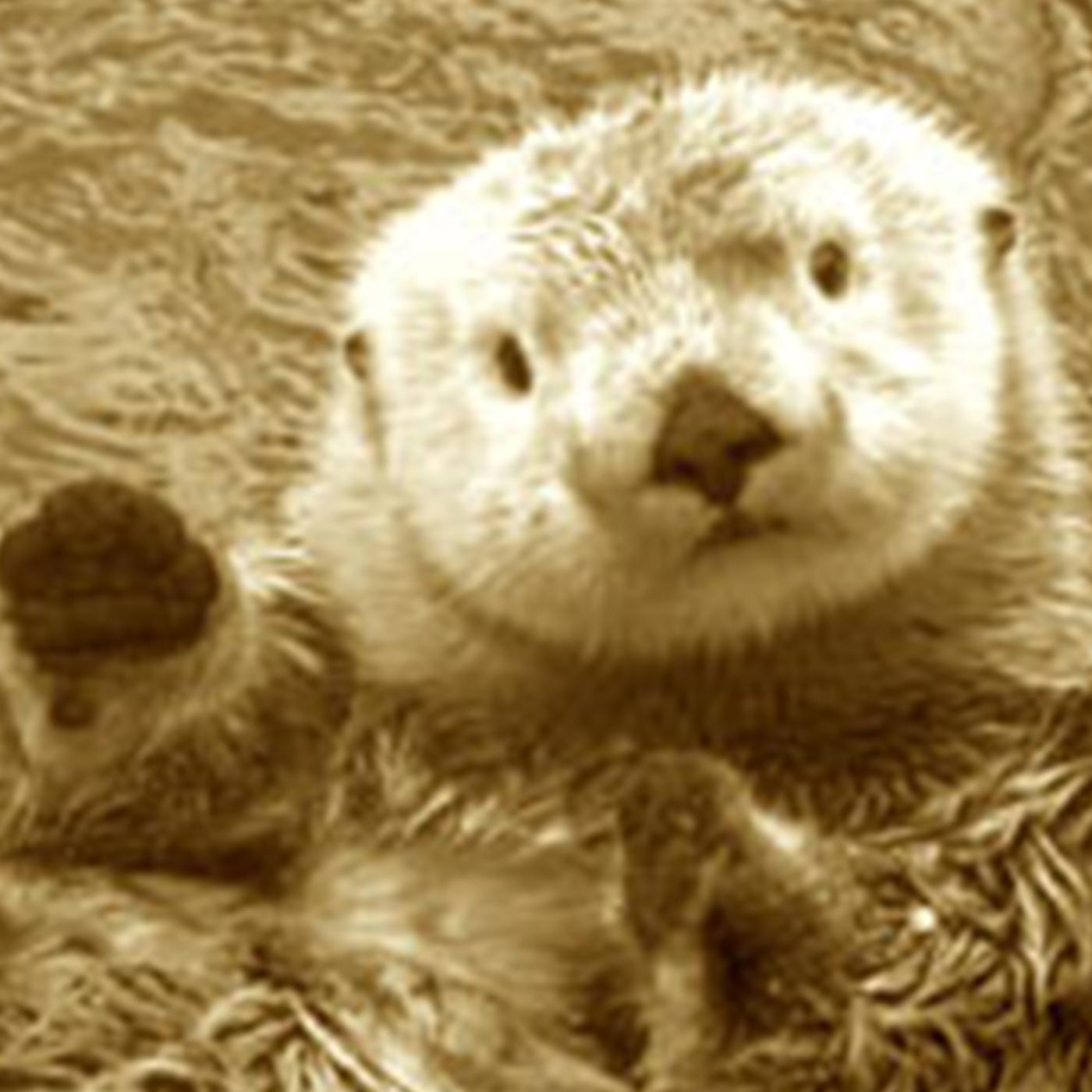 Ottercast Pro Weekly Funzone