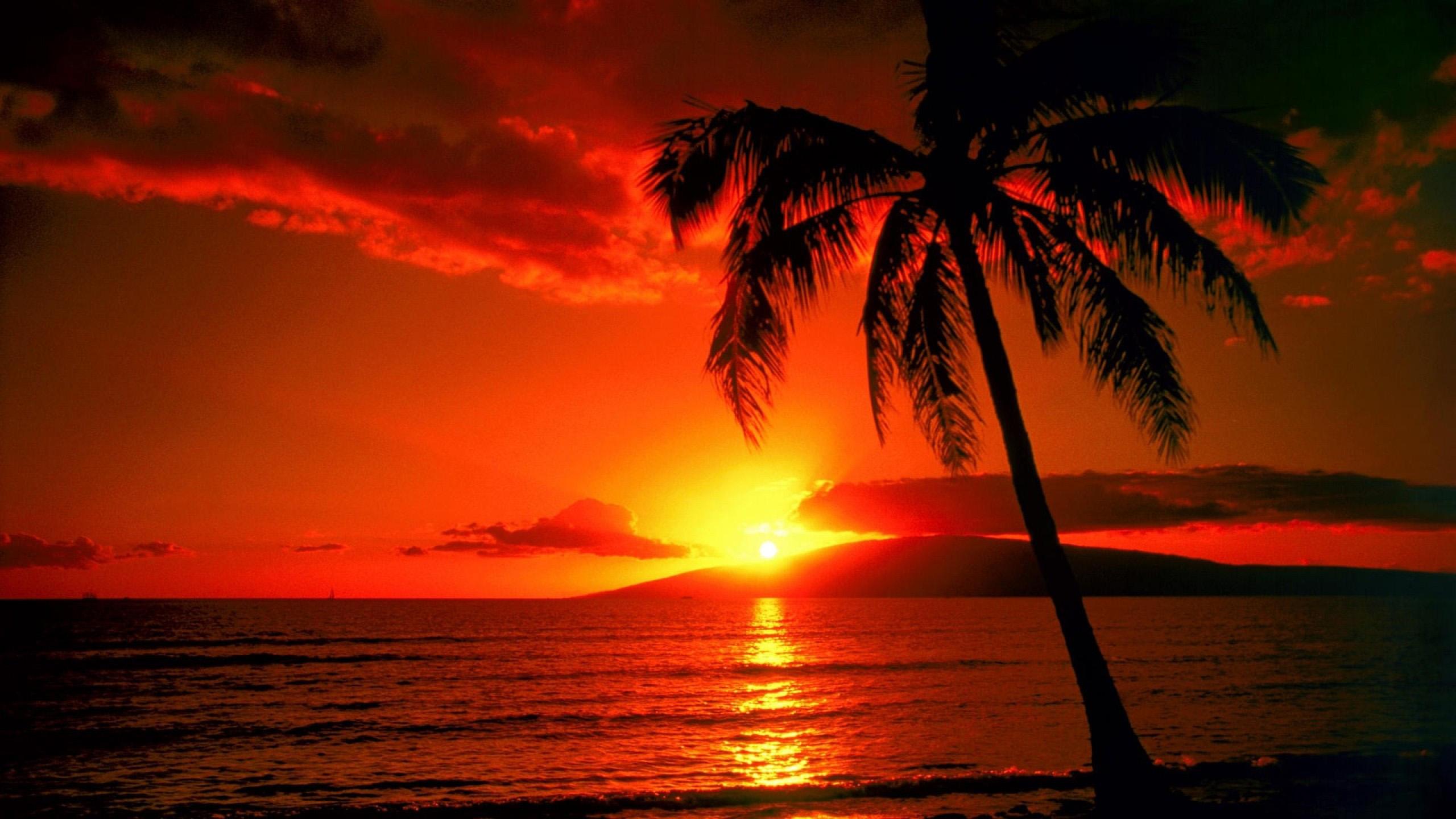 ハワイ最新情報:バイリンガルニュース