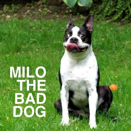Milo the Bad Dog