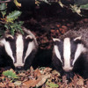 24hour party badgers