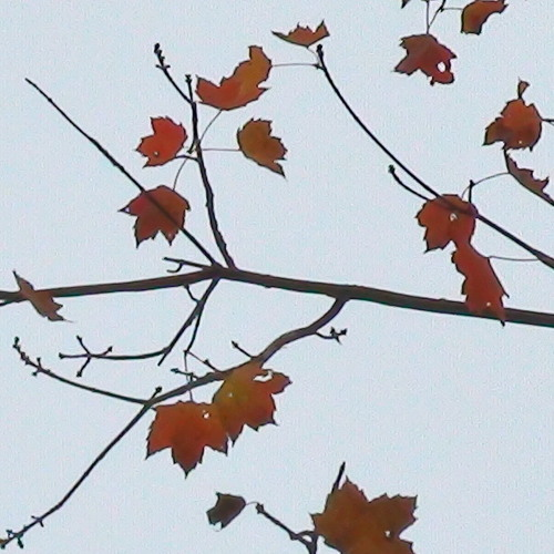 Autumn09djPromoMix