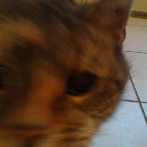 DisPjutR - Requiem for a Cat