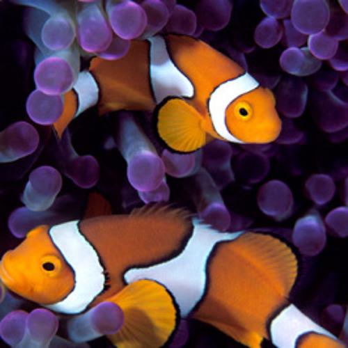 Underwater - Lost in the Sub Aquatic Cosmos